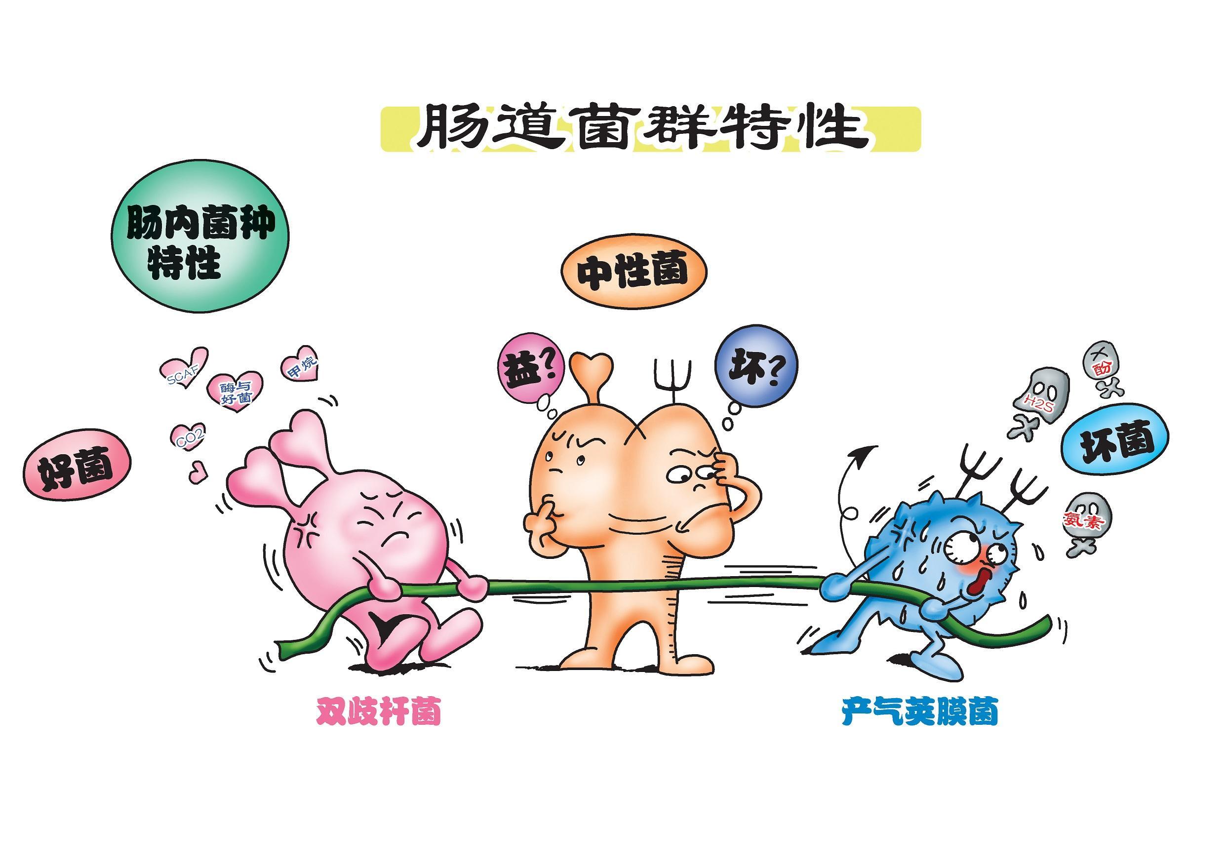 """酵素为何能降""""三高""""?"""
