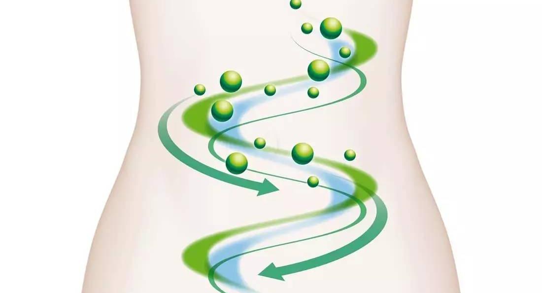 酵素的作用:从整体到局部