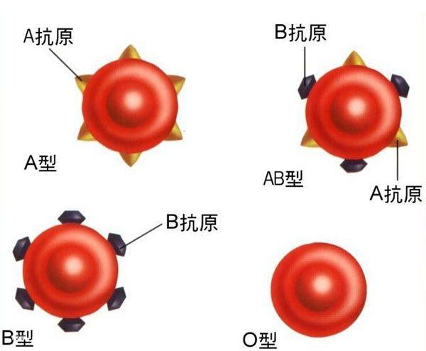 专家从肠道细菌的提取出一种能改变血型的酶3
