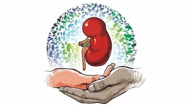 酵素对心、肝、肾、脾、肠的功效3
