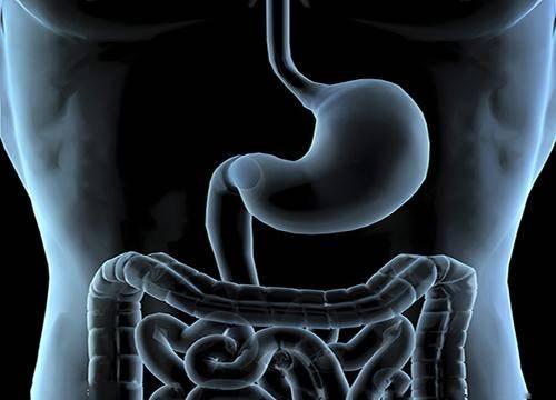酵素对心、肝、肾、脾、肠的功效5