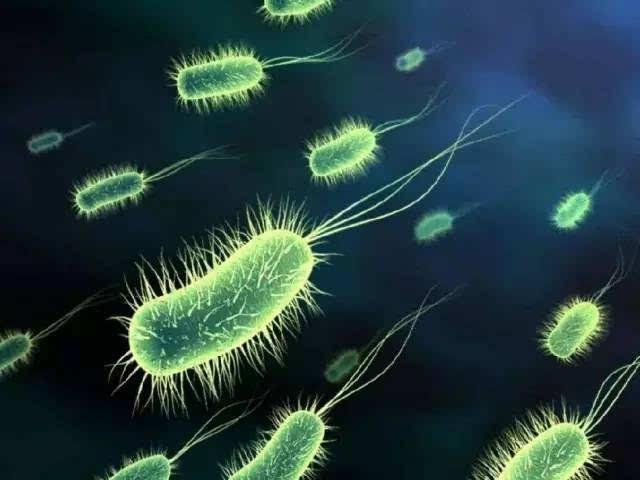食品工业的发展与微生物酶的应用