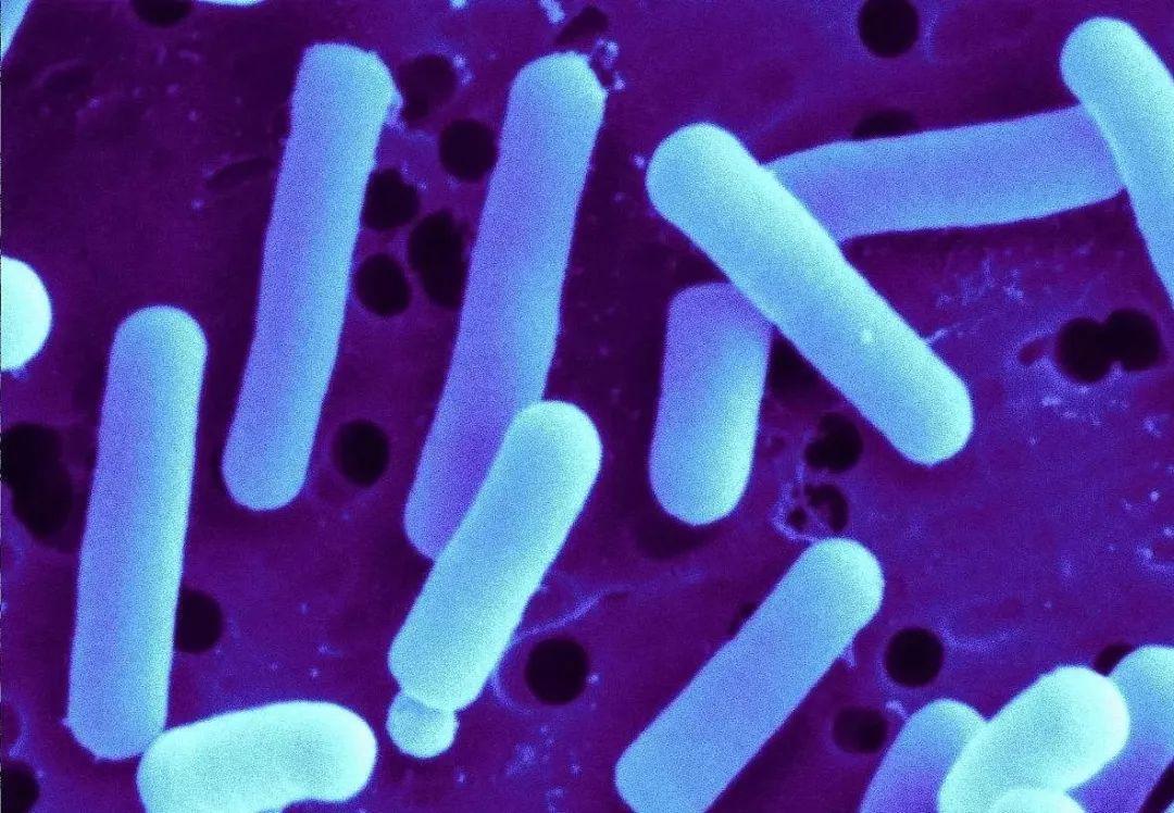 益生菌的重要性