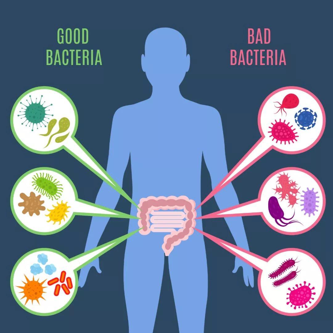 益生菌的作用和价格1