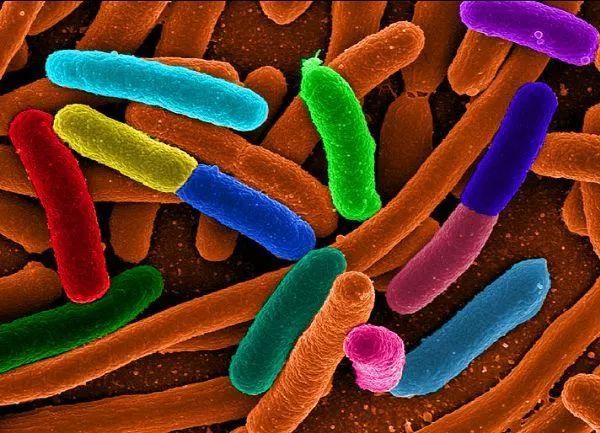 婴儿益生菌哪个牌子好?怎么挑选婴儿益生菌?