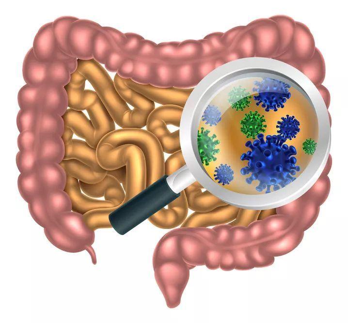 酵素和益生菌哪个重要?酵素与益生菌又有什么关系?