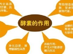 酵素的作用与功效,酵素的好处