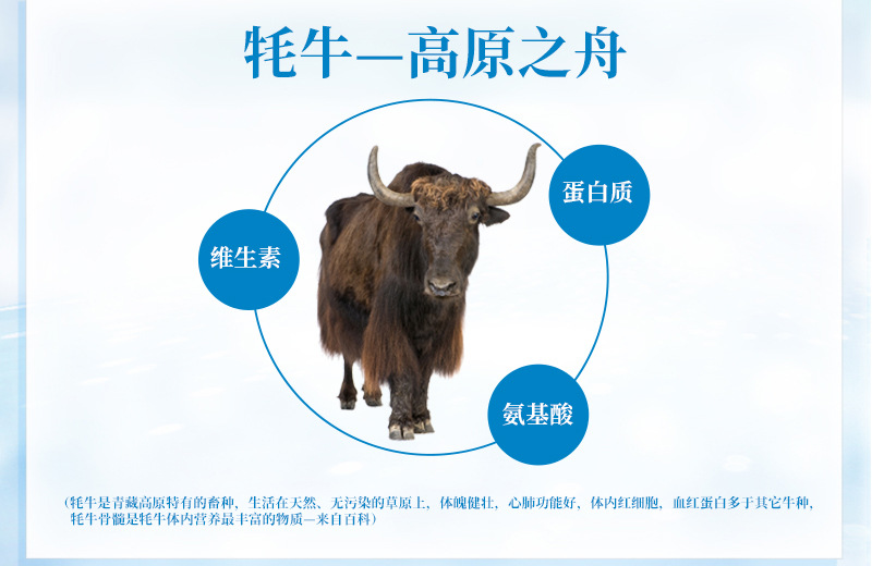 关于牦牛介绍