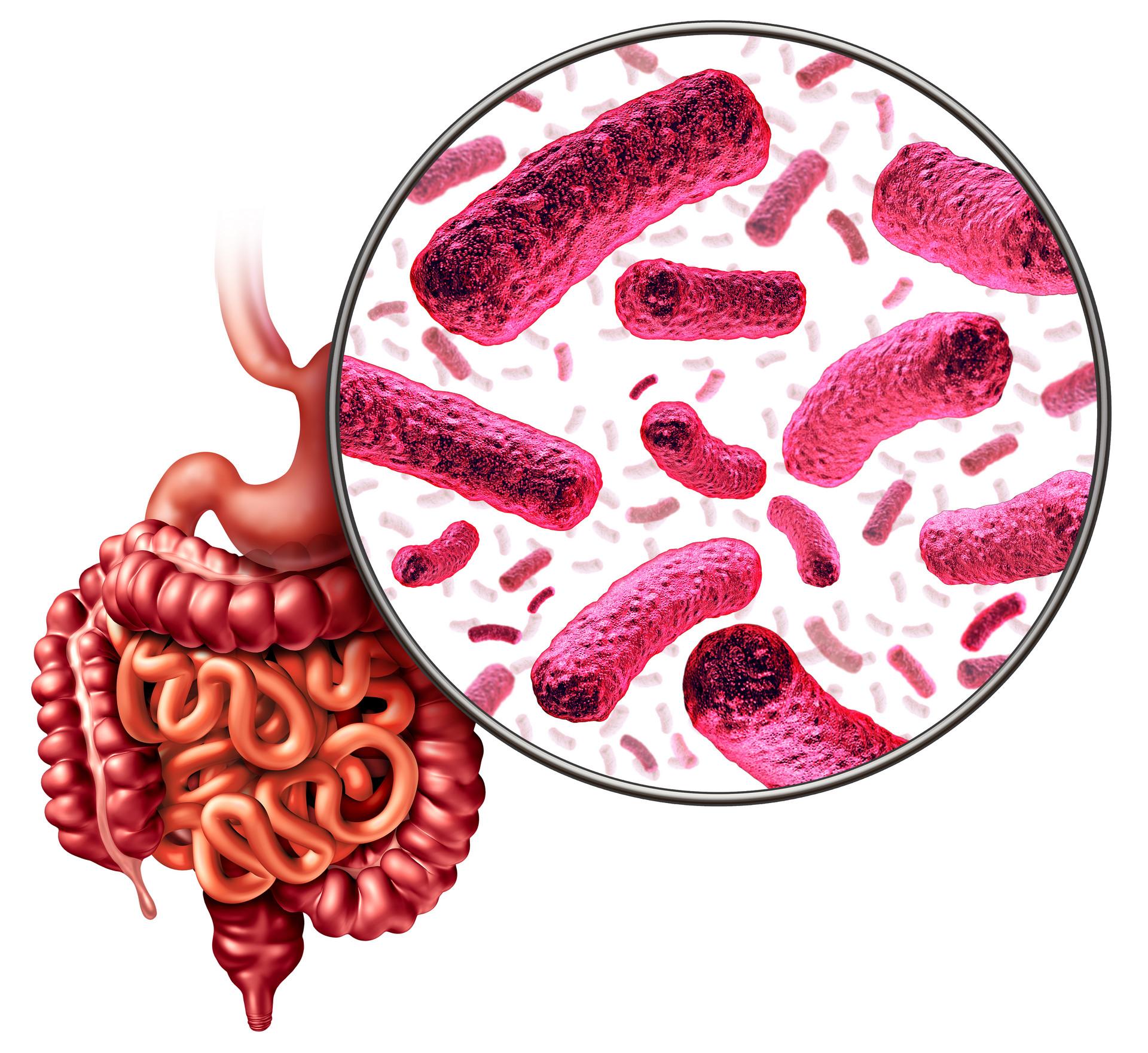 怎么吃益生菌效果最好