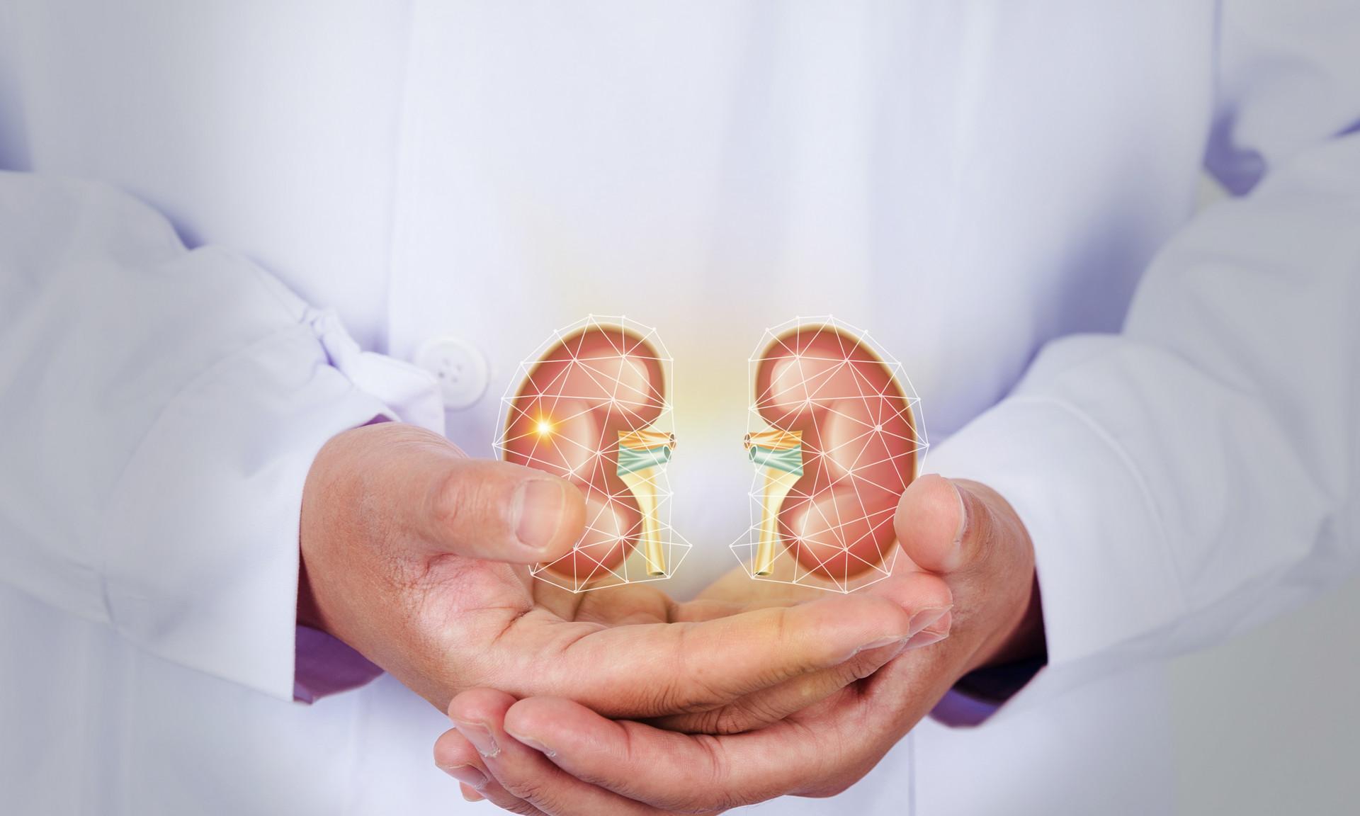 酵素对肾脏疾病的帮助