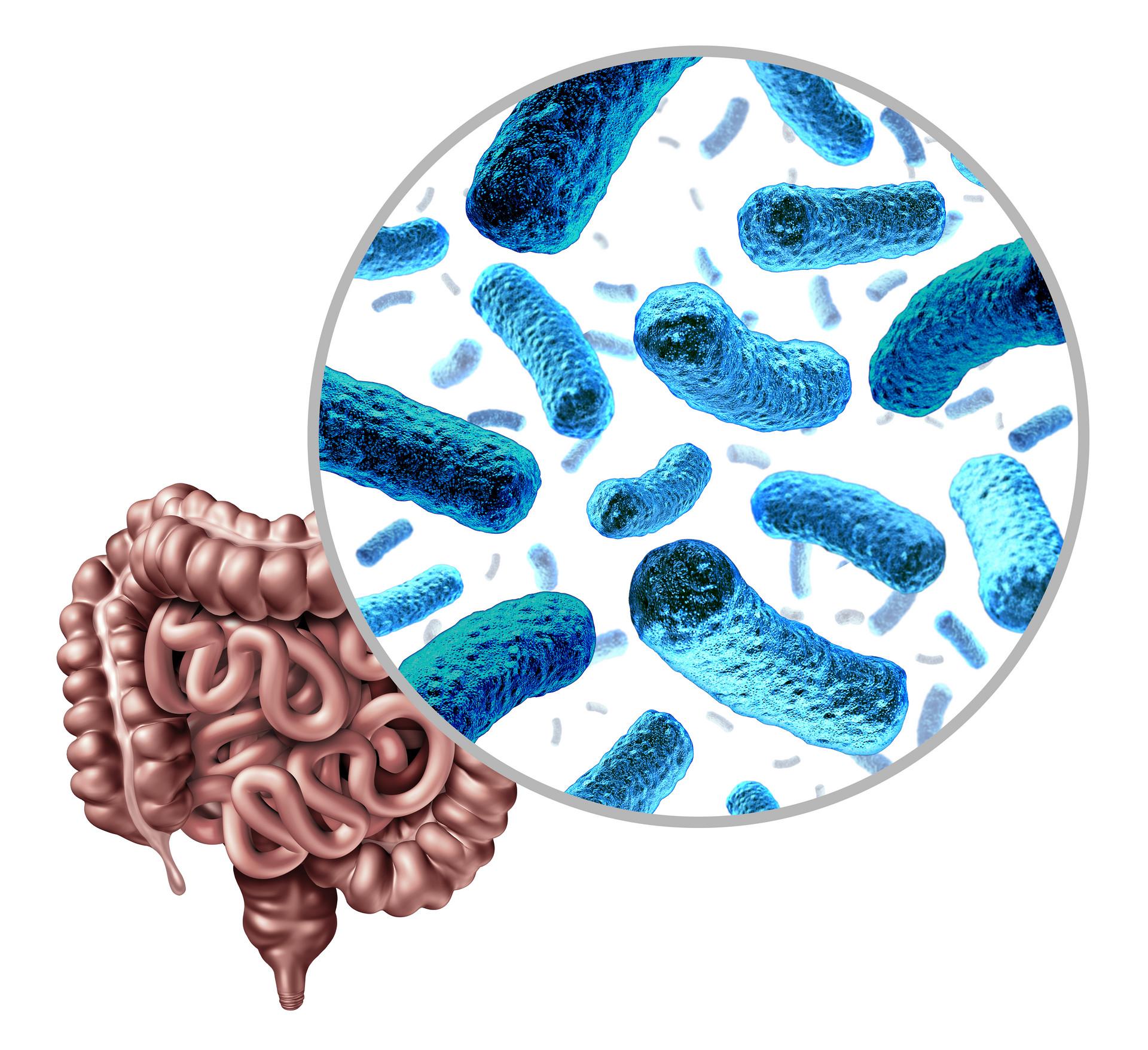 益生菌怎么吃效果好?吃益生菌有什么注意事项?1